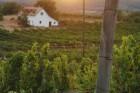 Alkony a szőlőhegyen - Szentantalfa